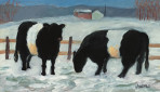 218 Galloways in Winter – Matted Card