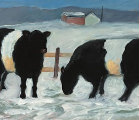 218 Galloways in Winter – Cards